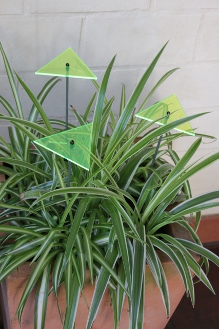 sunart No. 03s small zuversichtlich grün / 40 cm